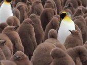 A Pingvin Király