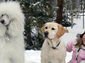 A kutya, aki megmentette a karácsonyi vakációt