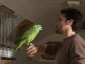 A papagáj