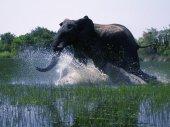 Afrikai szafari
