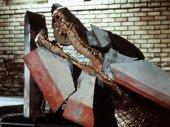 Az aligátor