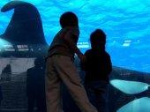 Blackfish - Egy kardszárnyú delfin története