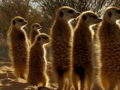 David Attenborough: Afrika