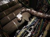 Kígyók a fedélzeten