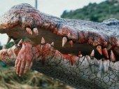 Krokodil 2.