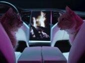 Kutyák és macskák 3. - A mancs parancs