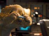 Kutyák és macskák - A rusnya macska bosszúja