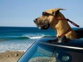 Marmaduke - A kutyakomédia