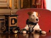 Pancho, a milliomos kutya